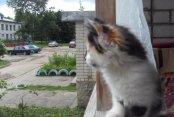 Кошка Маруся от Алексея Хомякова